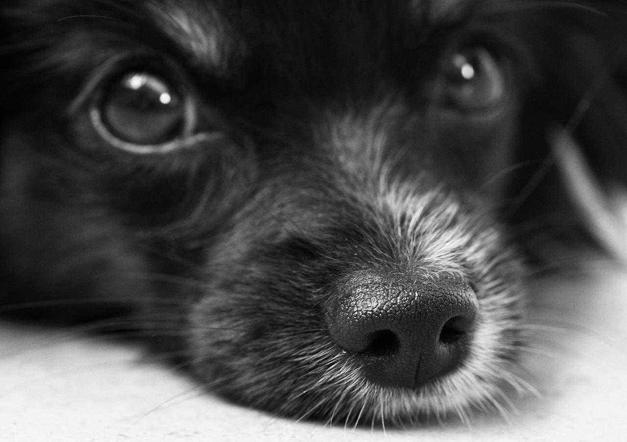 Hundehaltung In Der Mietwohnung Petri Hausverwaltungen Gmbh